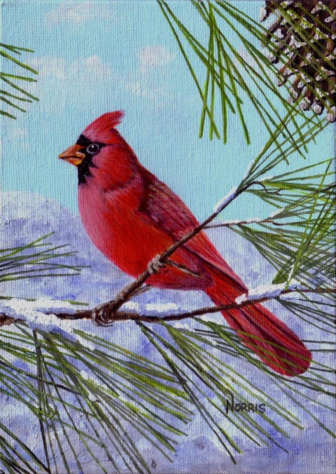 Winter Redbird