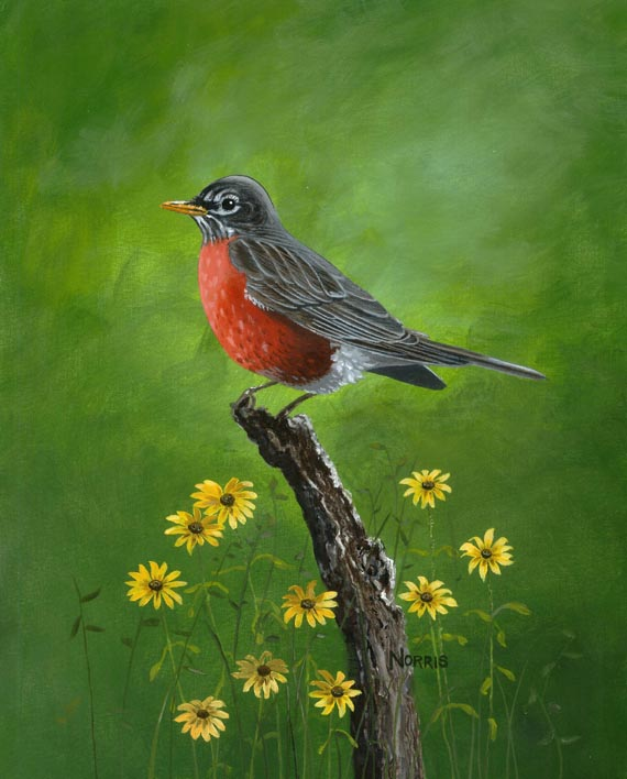 Smoky Mountain Robin