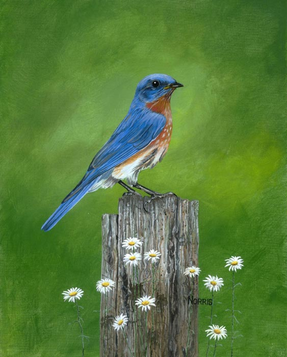 Smoky Mountain Bluebird and the Tree Stump