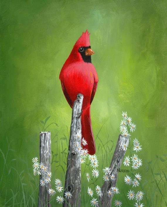 Smoky Mountain Cardinal No. 2