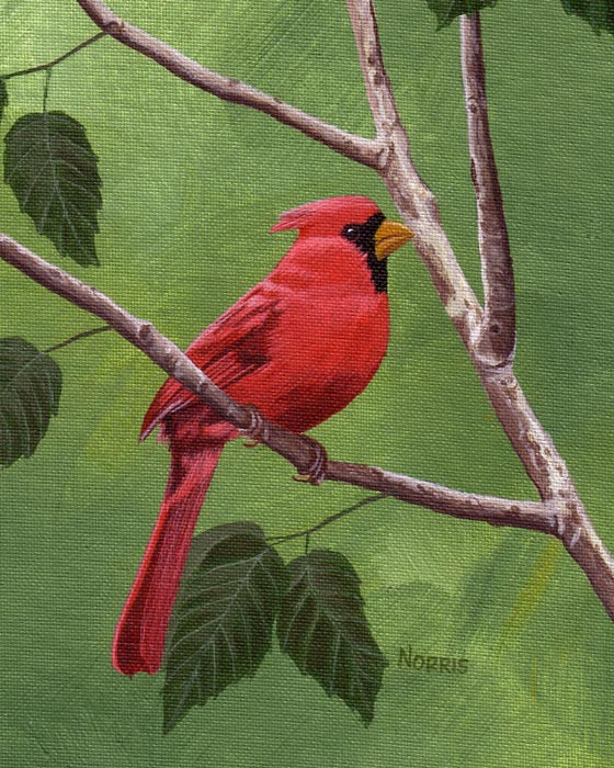 Smoky Mountain Cardinal