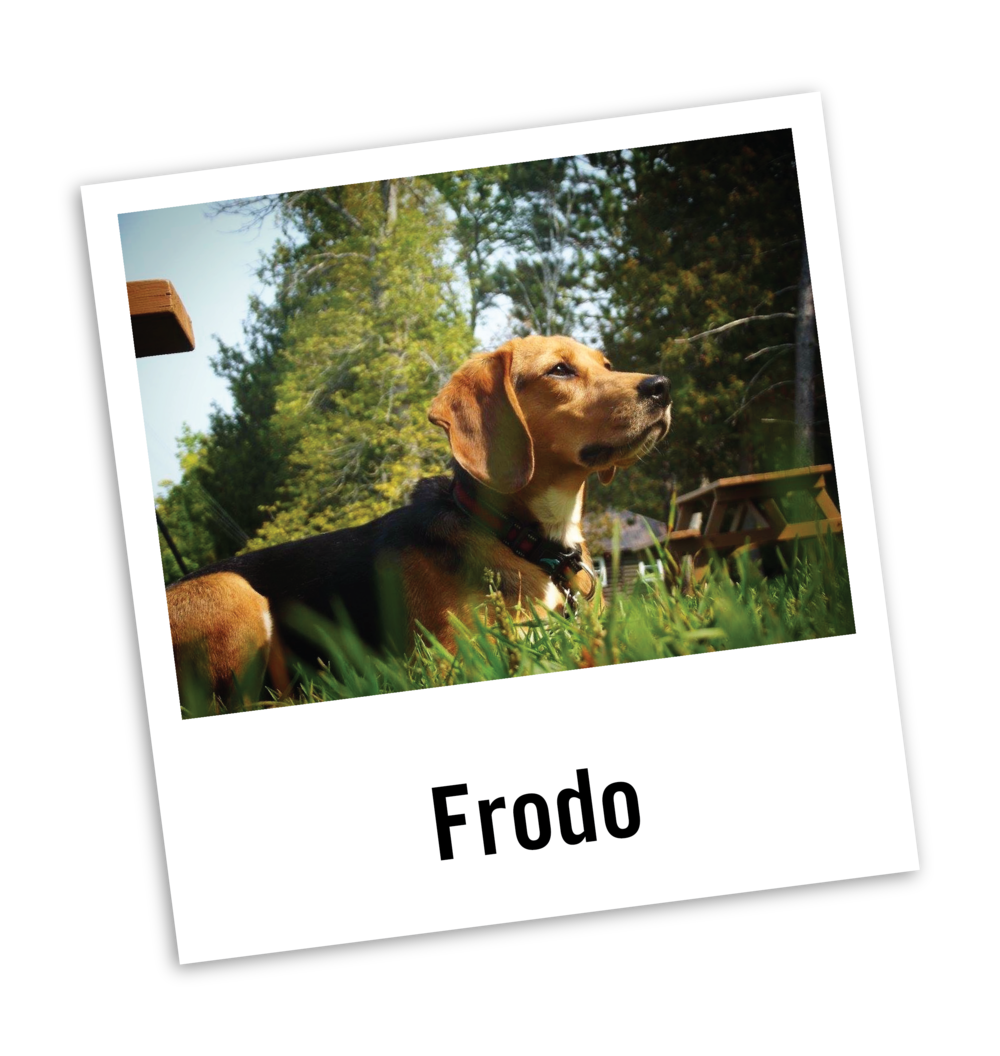 Frodo's Story.png