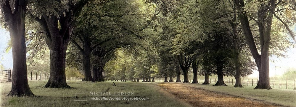 Avenue of Trees, Berkshire, England, 1997 (hand coloured- over 5000 posters sold)