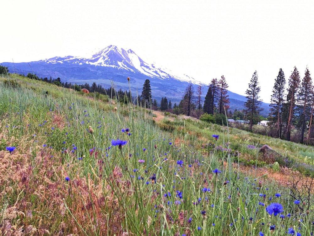 05 Road to Montana - Mnt Shasta.jpg