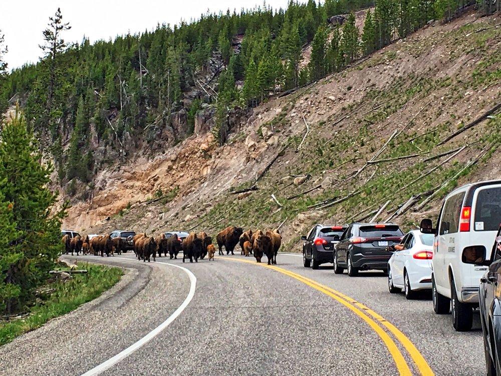 07 Yellowstone 6.jpg