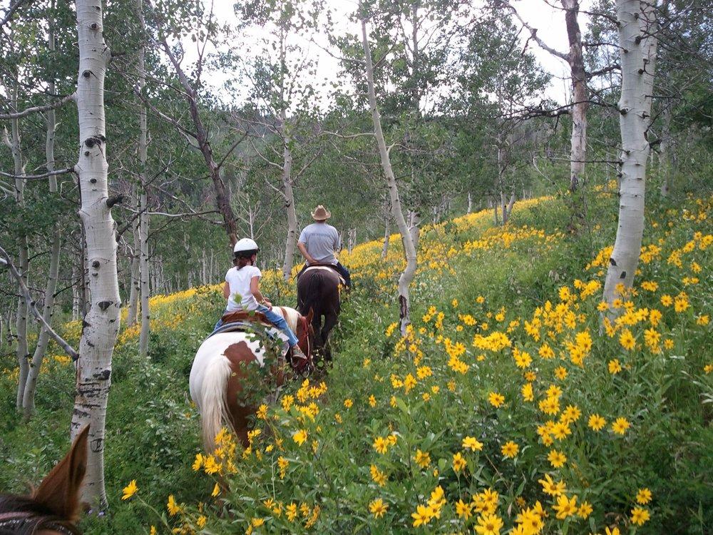 NEW HORSEBACK PICTURE.jpg