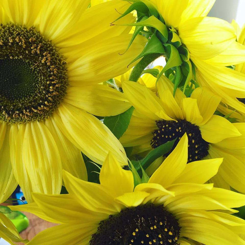 Sunflowers =cheery color in the summer, lots of bird food in the fall.
