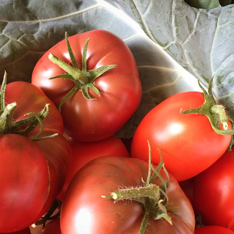 Red, ripe tomatoes in front of fresh collard greens.