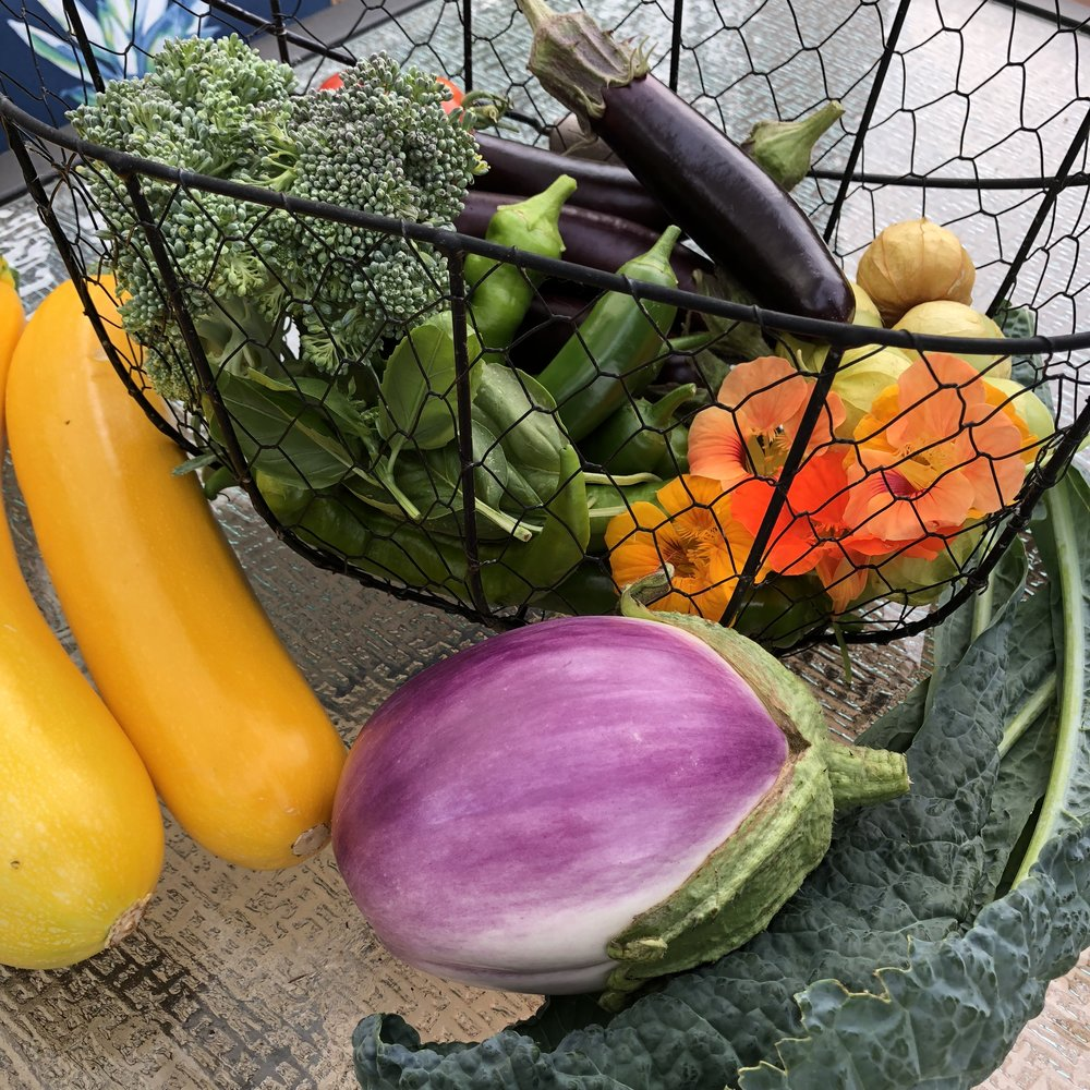 Summer-Veggie harvest2.jpg