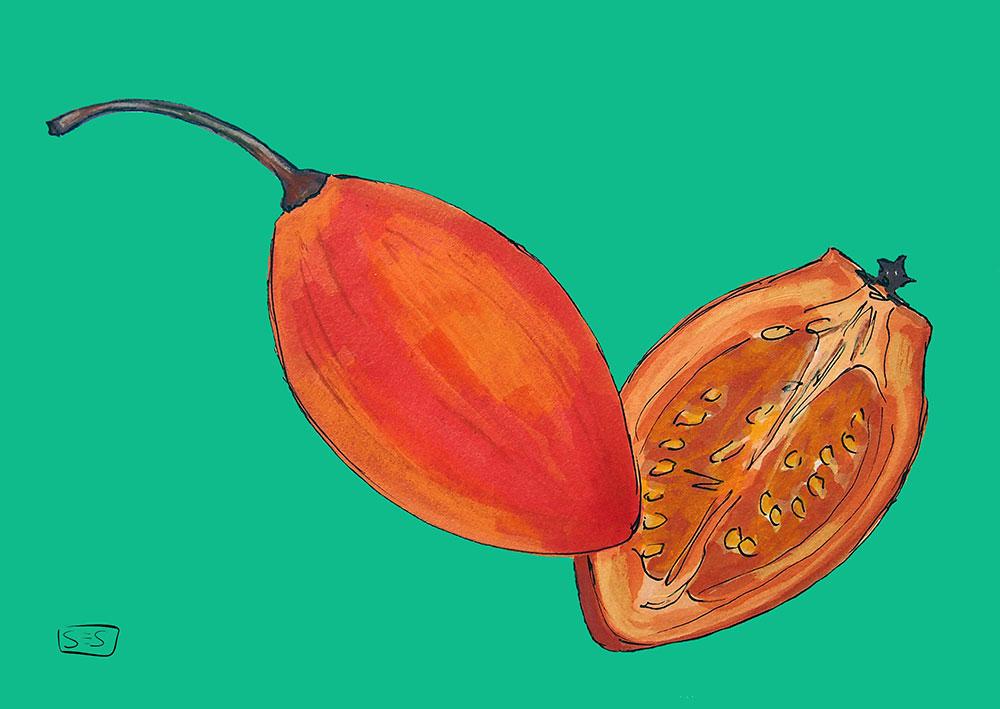 web-tomatedearbol.jpg