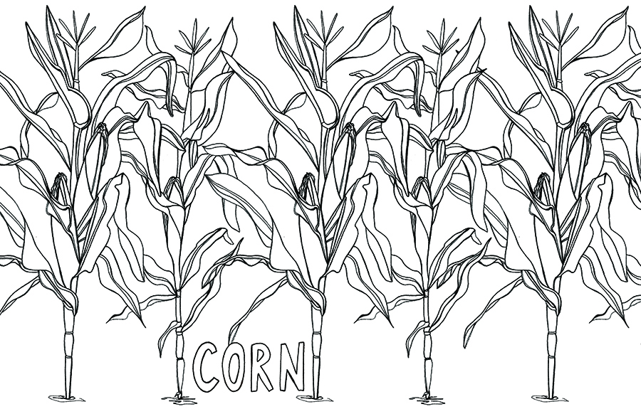 corn layout sm.jpg