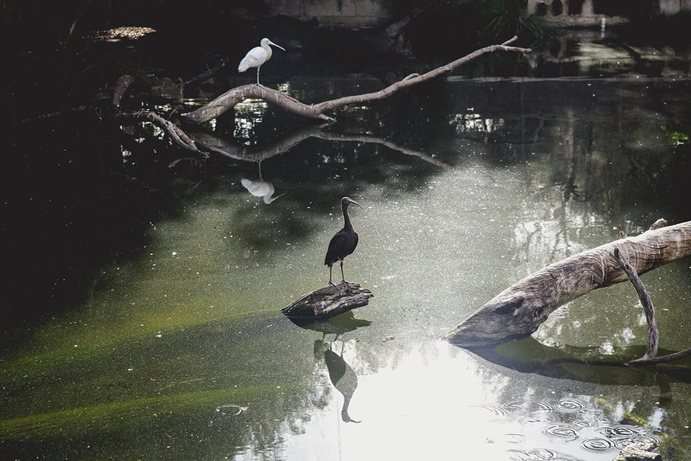 20160416-zoo-2176.jpg