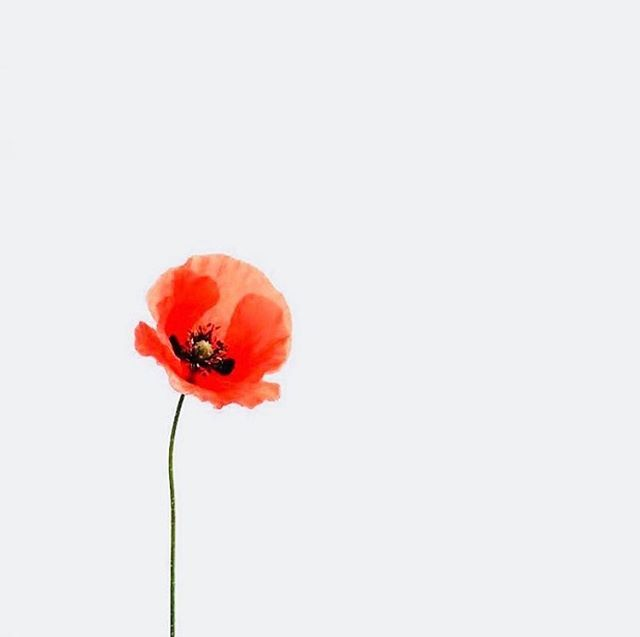 Lest we forget #anzacday2019