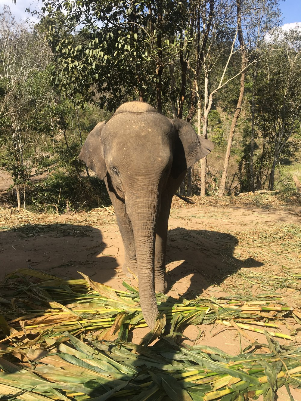 Meet Peter, the cutest and most rambunctious 4-yo elephant.