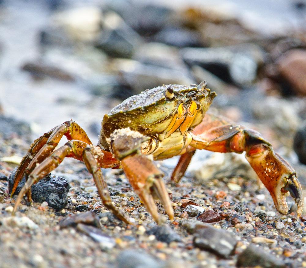 Krabbe-web-jpeg-dsc63554.jpg