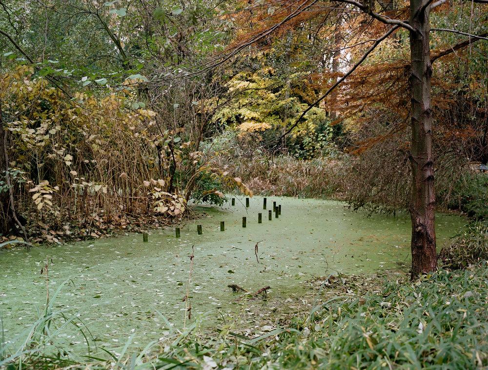 Tiergarten in November, 2016