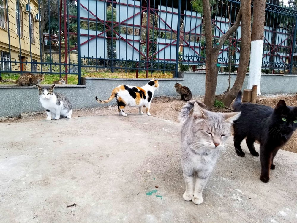 Street Cats of Tbilisi