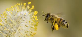 bijen en bloemen.jpg