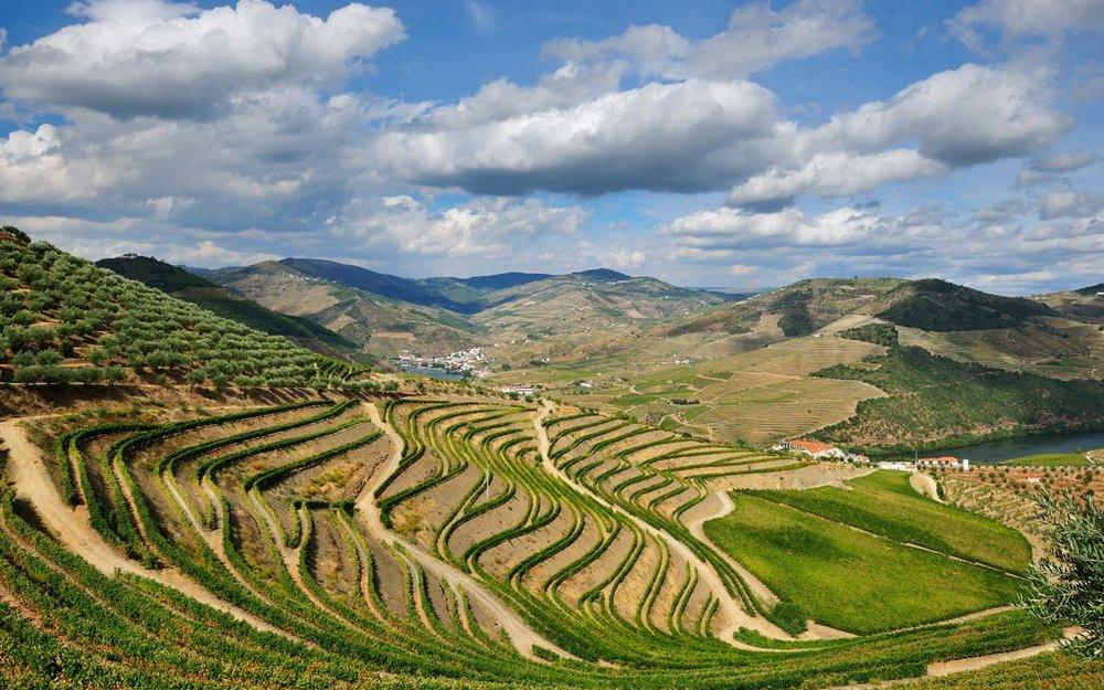 douro-valley-vineyard-PORTUGALWINE1116.jpg