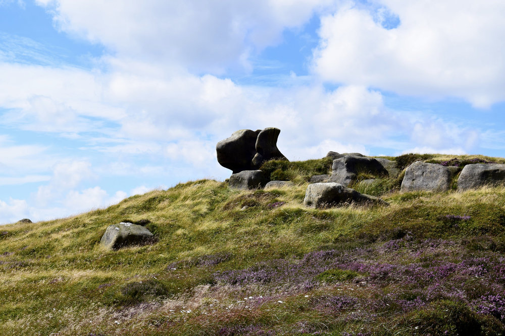 Purple heather in the Peaks