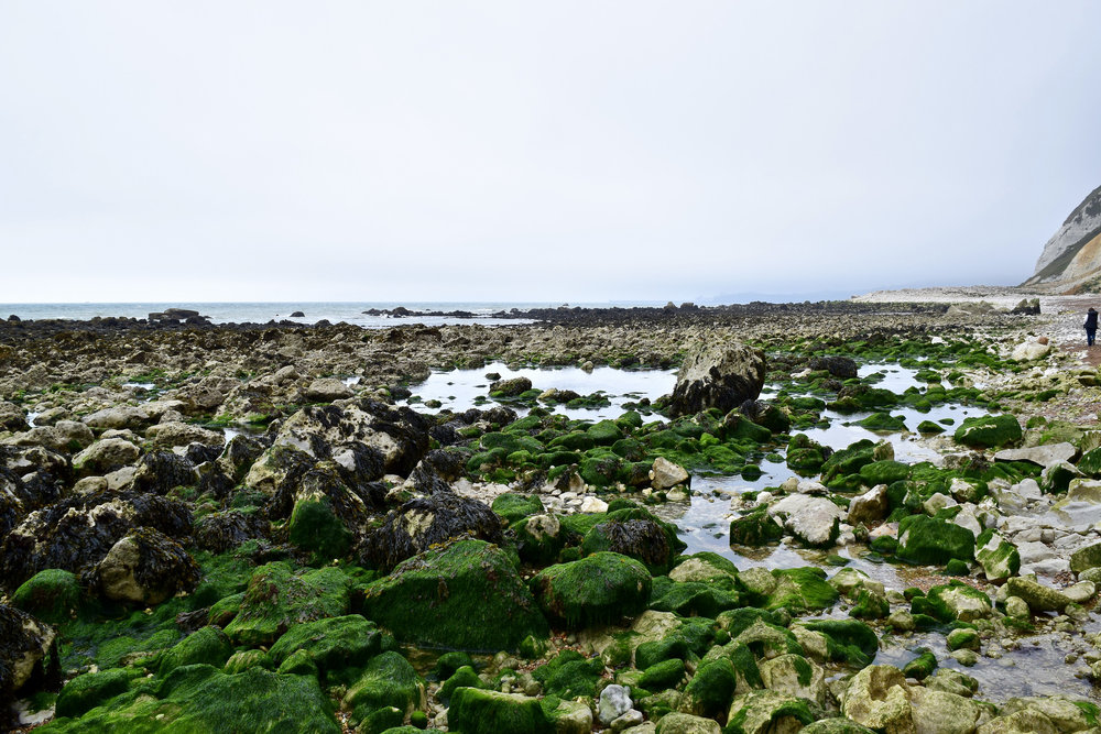 Algae and rocky beach.jpg