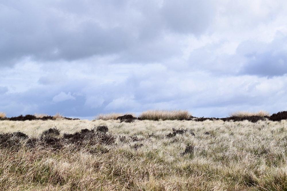 Peaks Grassland.jpg