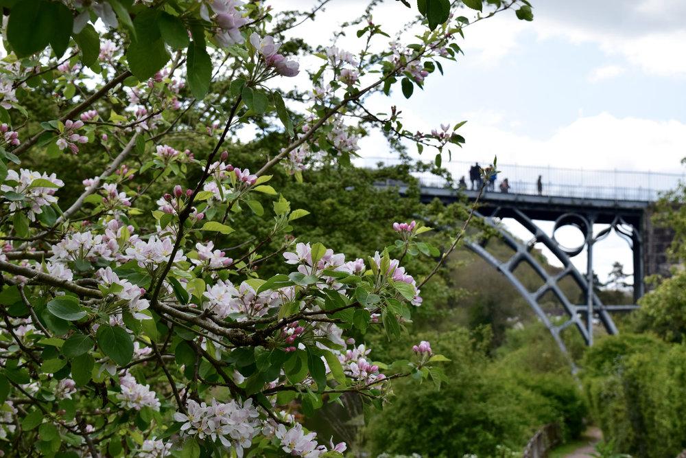 Blossoming Gardens