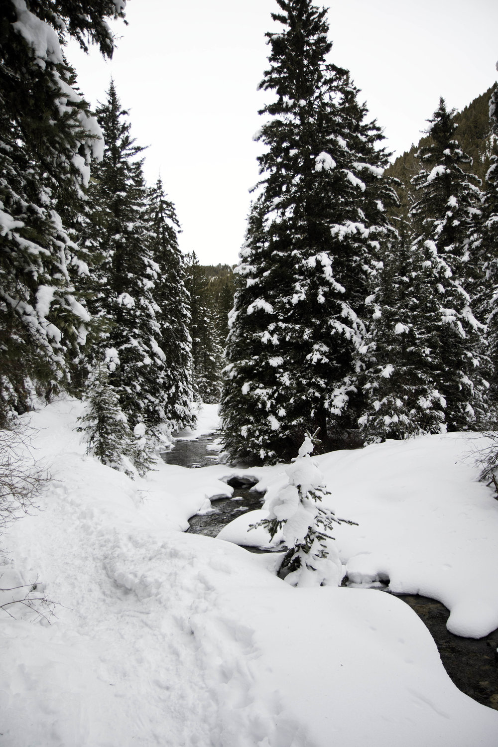 South Cottonwood Creek Trail. A beautiful winter hike near Bozeman, MT