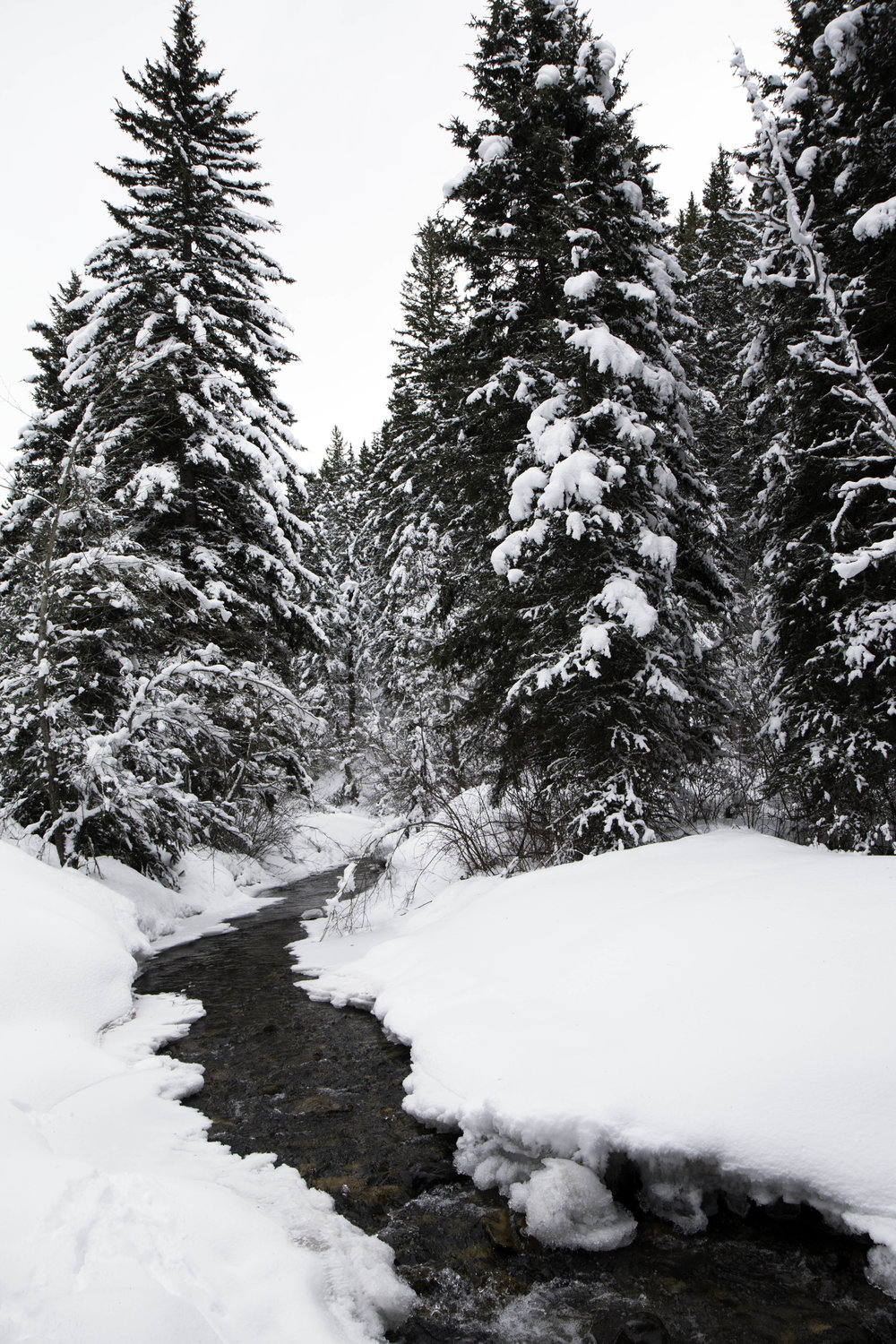 South Cottonwood Creek Trail. A winter hike near Bozeman, MT
