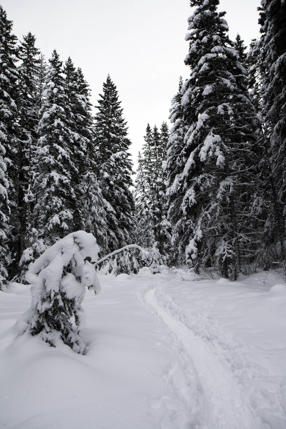 Gorgeous winter hikes near Bozeman, Montana - South Cottonwood Creek Trail