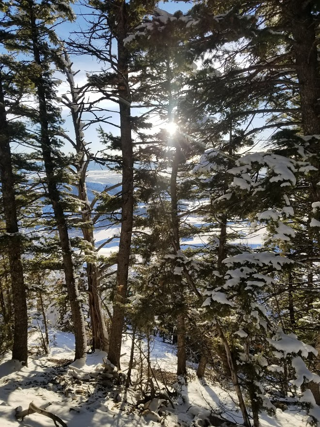 The sun peaking through the trees while I was hiking the M trail in Bozeman.