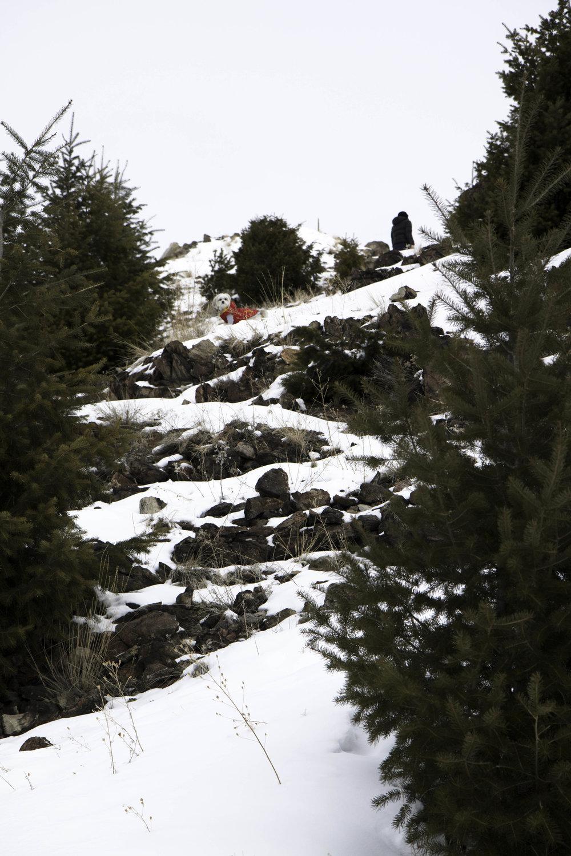 "Maltipoo hiking the ""M"" trail near Butte, America."