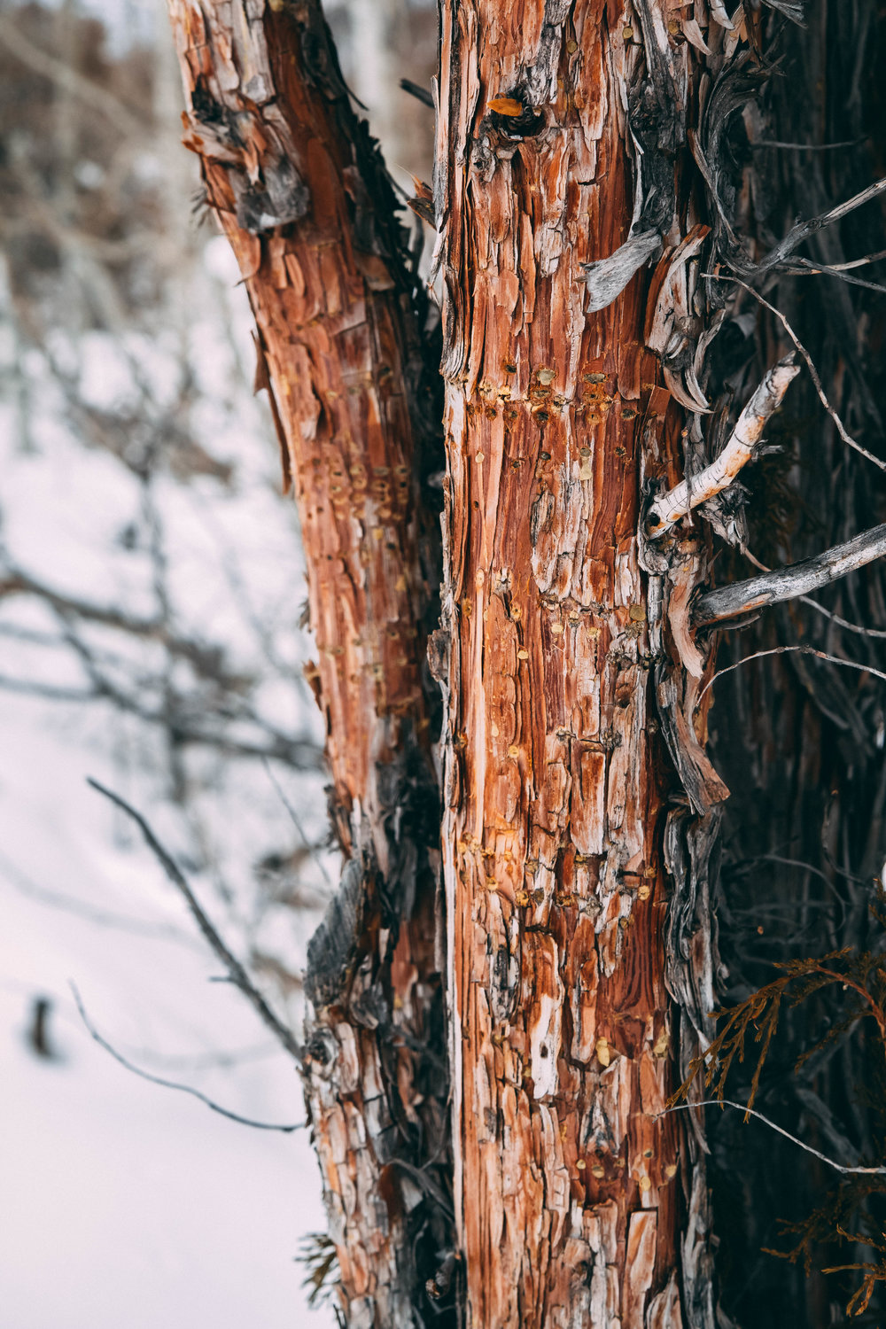 Gorgeously edited photo of a tree in Montana