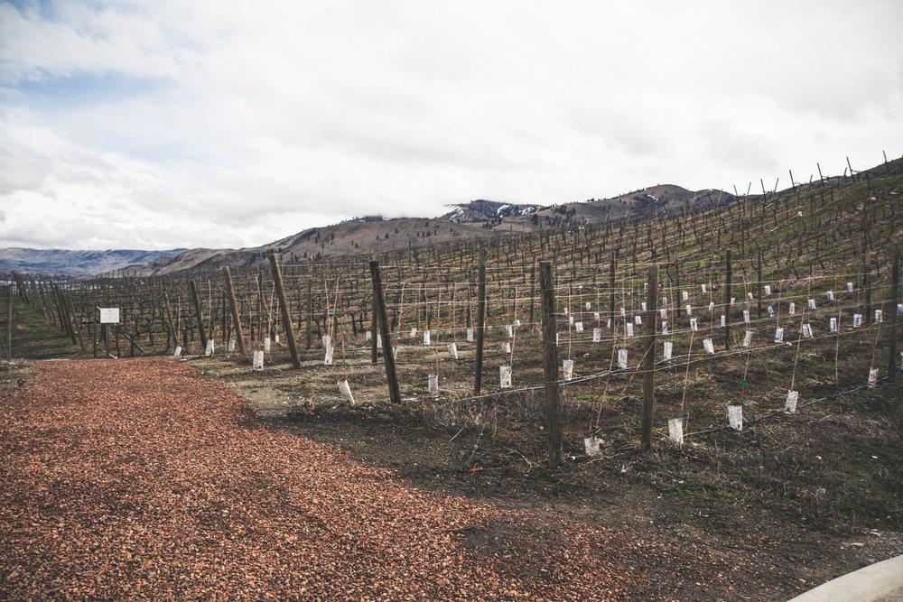 Things to do around Wenatchee, Washington. Wine taste your way around beautiful Lake Chelan.