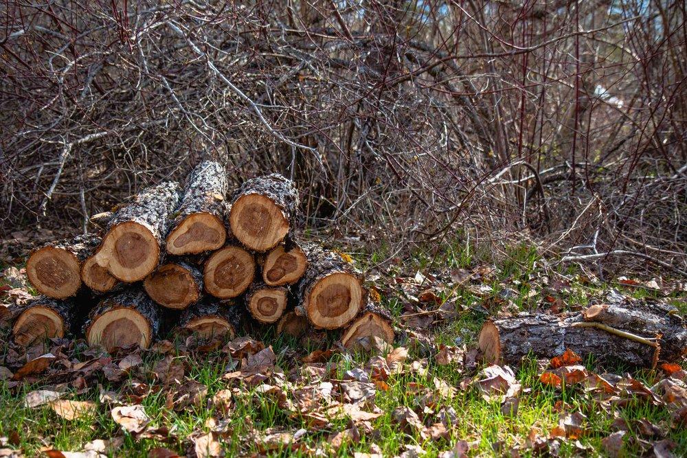 Firewood in Montana