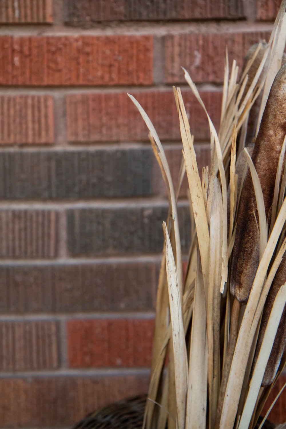 Brick and cattails