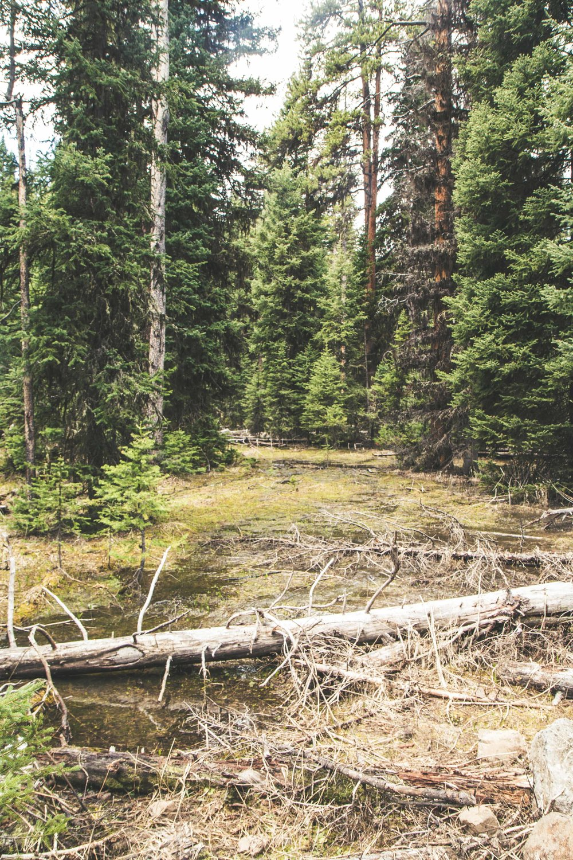 Hiking to Crescent Lake at Hyalite Reservoir near Bozeman, Montana