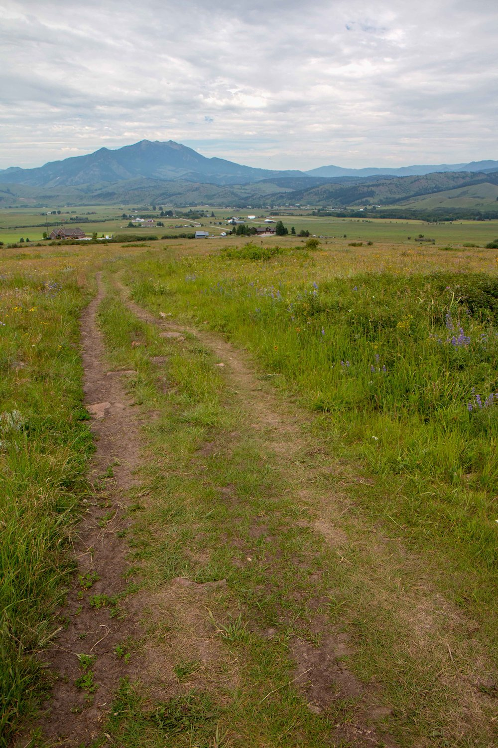 Mount Ellis Hike near Bozeman, Montana. Beautiful views of the valley and wonderful wildflowers in the spring. Also great for horses.