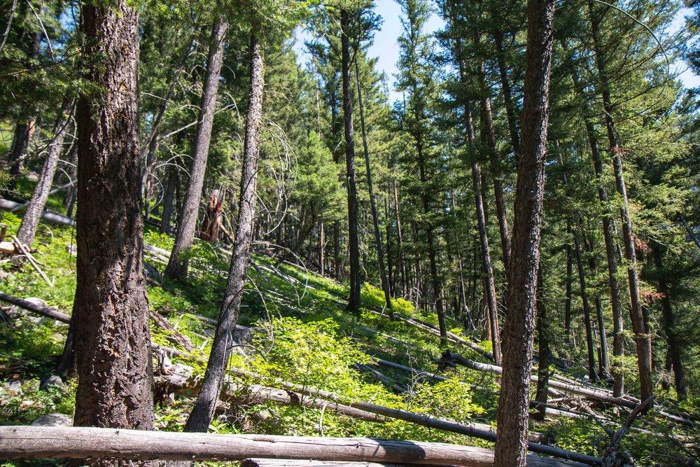Hiking Lava Lake (Cascade Creek) Trail in Gallatin Canyon near Big Sky, MT