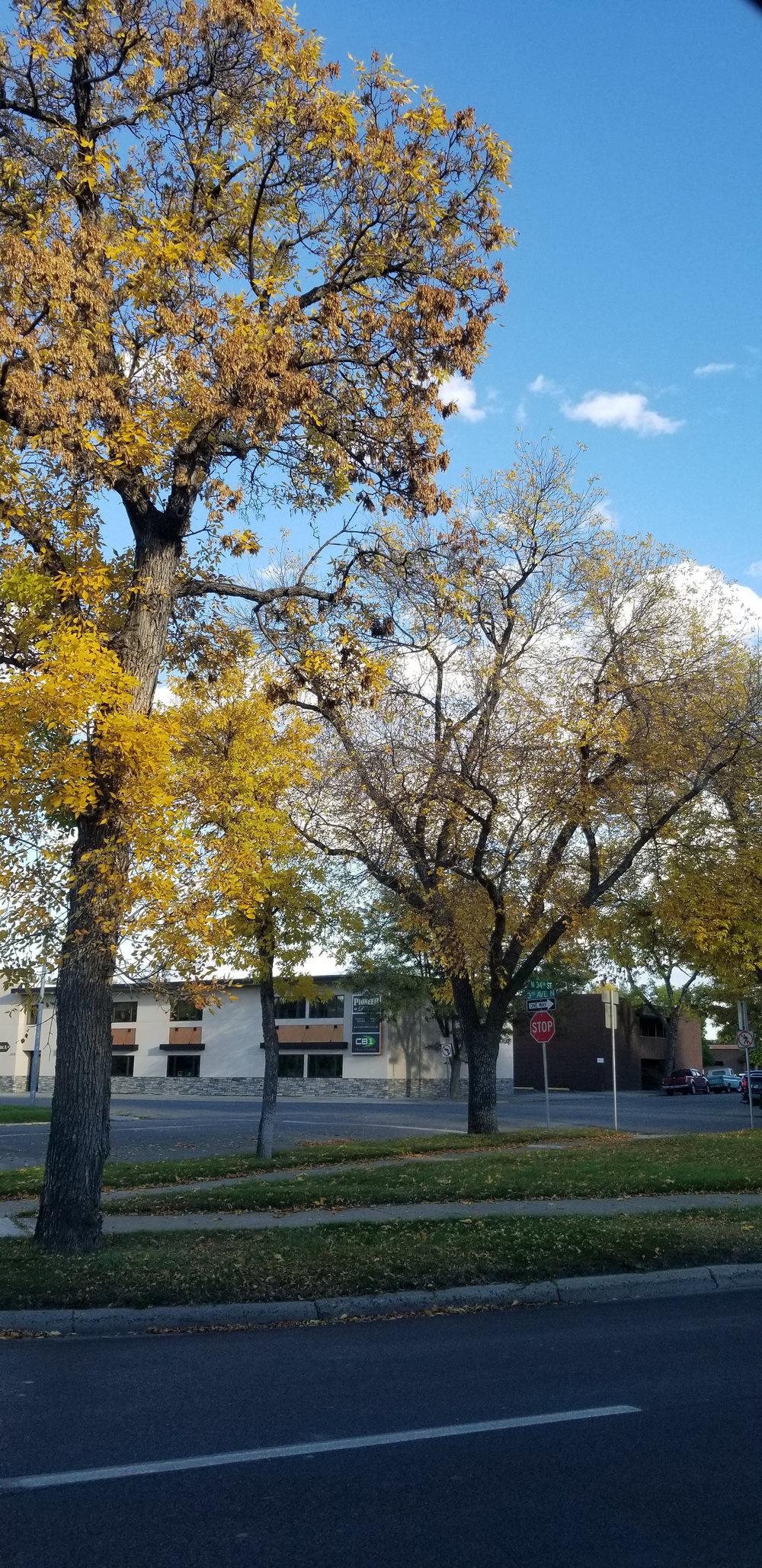 Beautiful falls street colors in Billings, Montana. Leaves fall in autumn