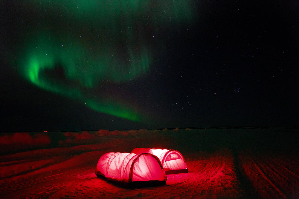Caterpillar tents in the arctic