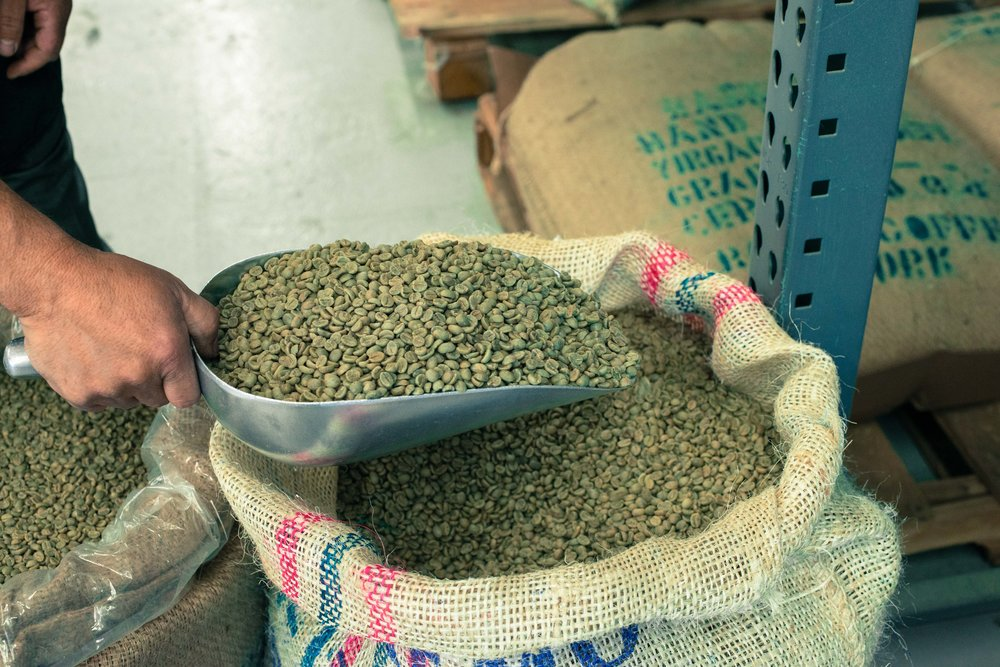 Green coffee beans before roasting.