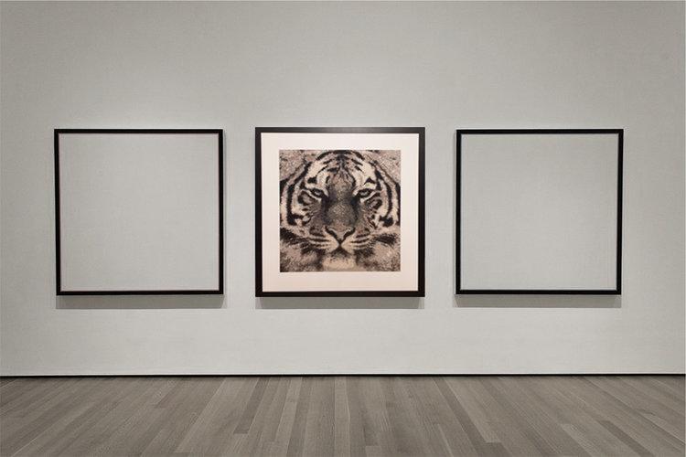 tiger_gallery.jpg