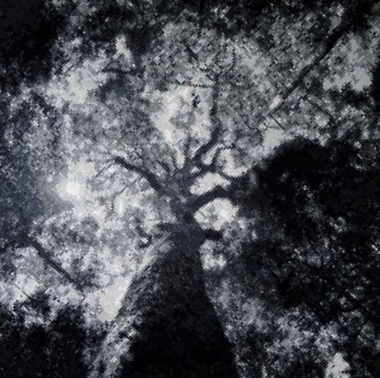 treefull.jpg