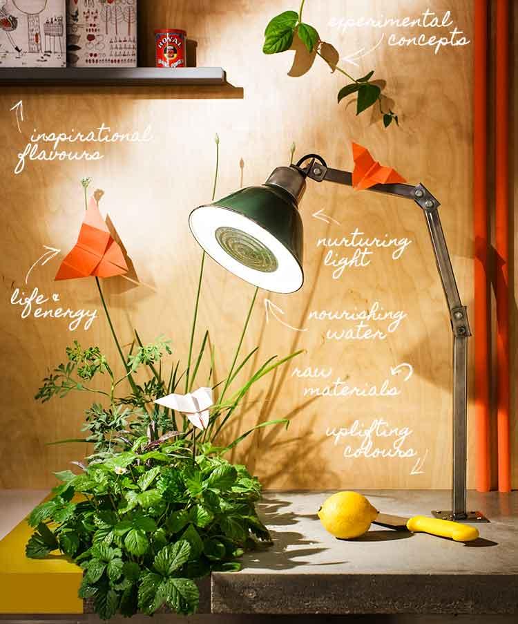 carolinesantos_farmkitchen_100percentdesign.jpg