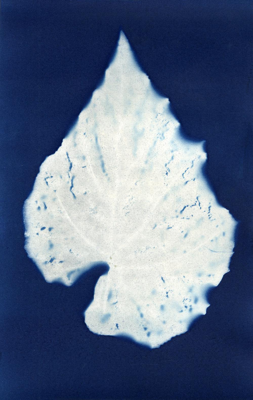 Plasticus syngonium podophyllum