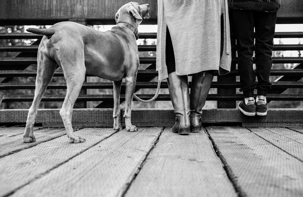 feet, weimaraner, Griffith woods, bridge shot, family photographer, dog