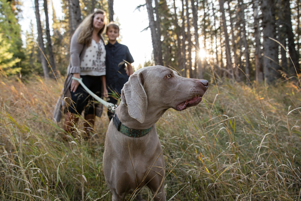 weimaraner, Griffith woods, family photographer, mom and her son