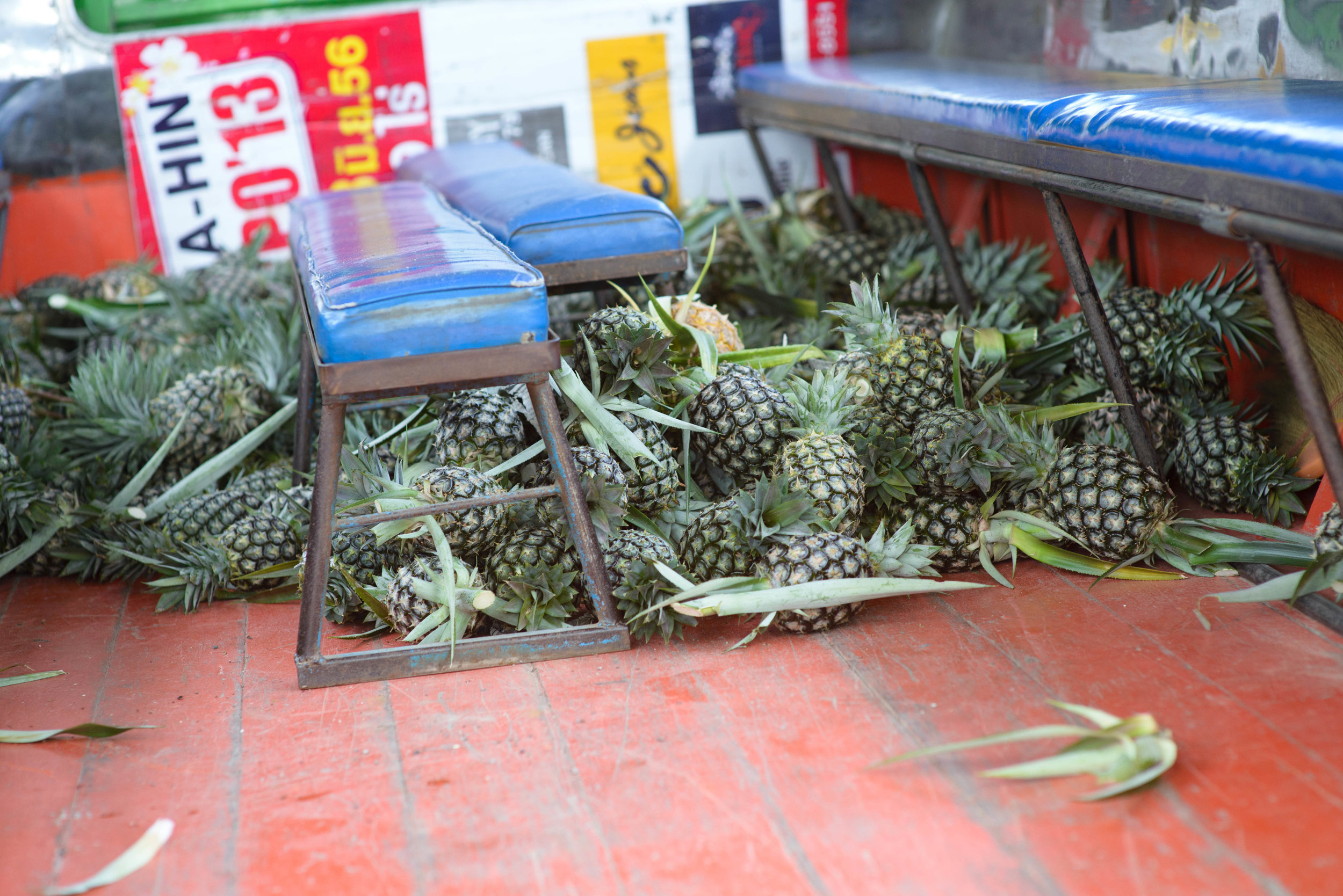 We collected pineapples for the elephants and threw them into our truck.