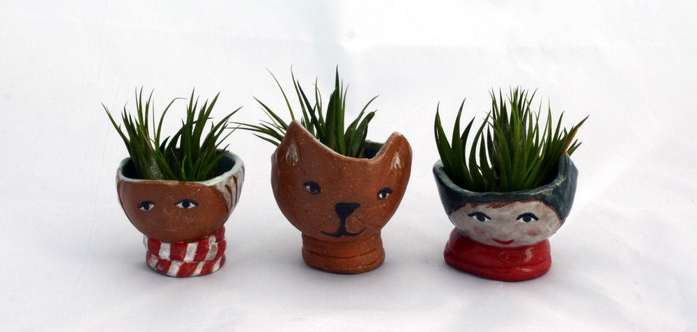 air plant people